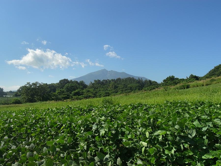岩木山と毛豆畑