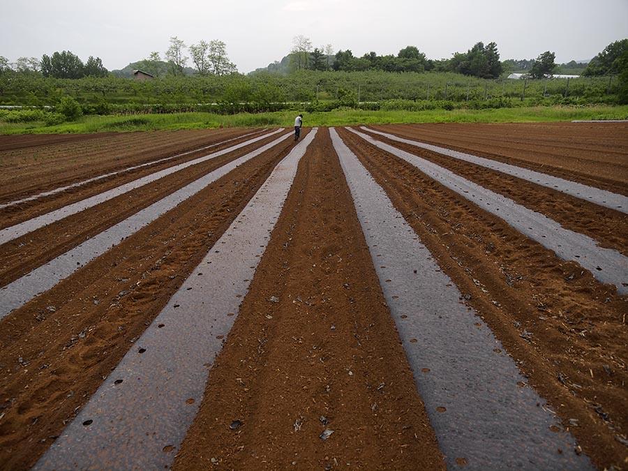 毛豆栽培 種まき1