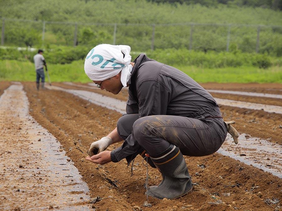 毛豆栽培 種まき3