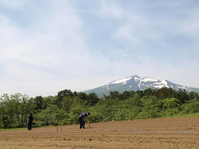 毛豆研究会農園と岩木山