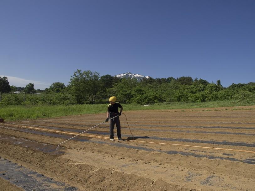 毛豆研究会農園水まきの様子
