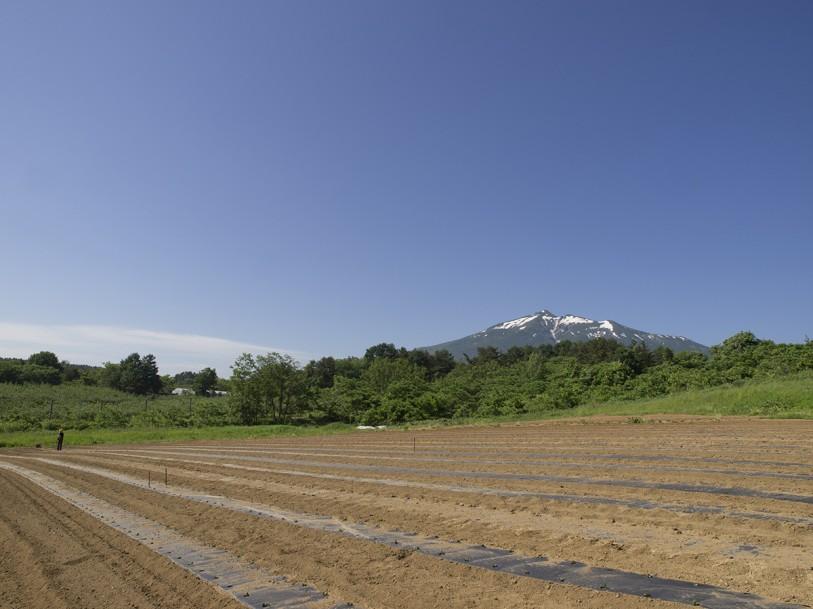 岩木山と毛豆研究会農園