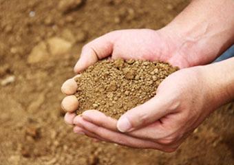毛豆の土づくり