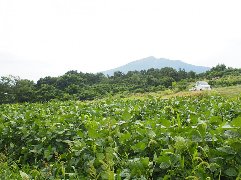 2013年8月29日毛豆研究会農園