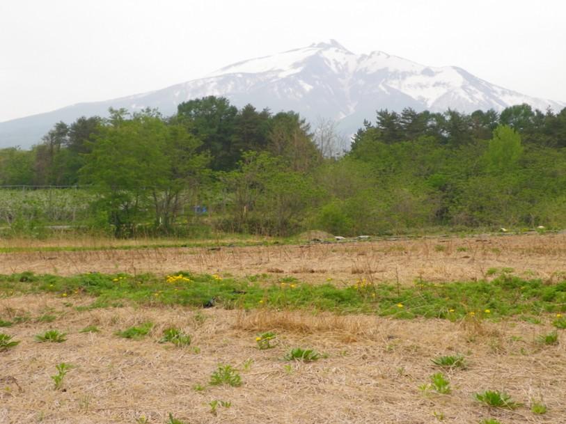 青森毛豆研究会 農園の様子